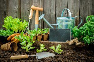 Pflanz- und Gartenerde